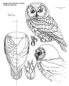 Patterns For Wood Carving Owls